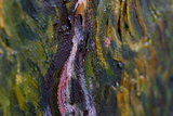 Cypresses detail Oil Painting Replica