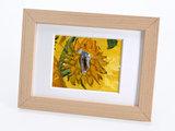 Zonnebloemen mini schilderij, geschilderd in olieverf op doek_